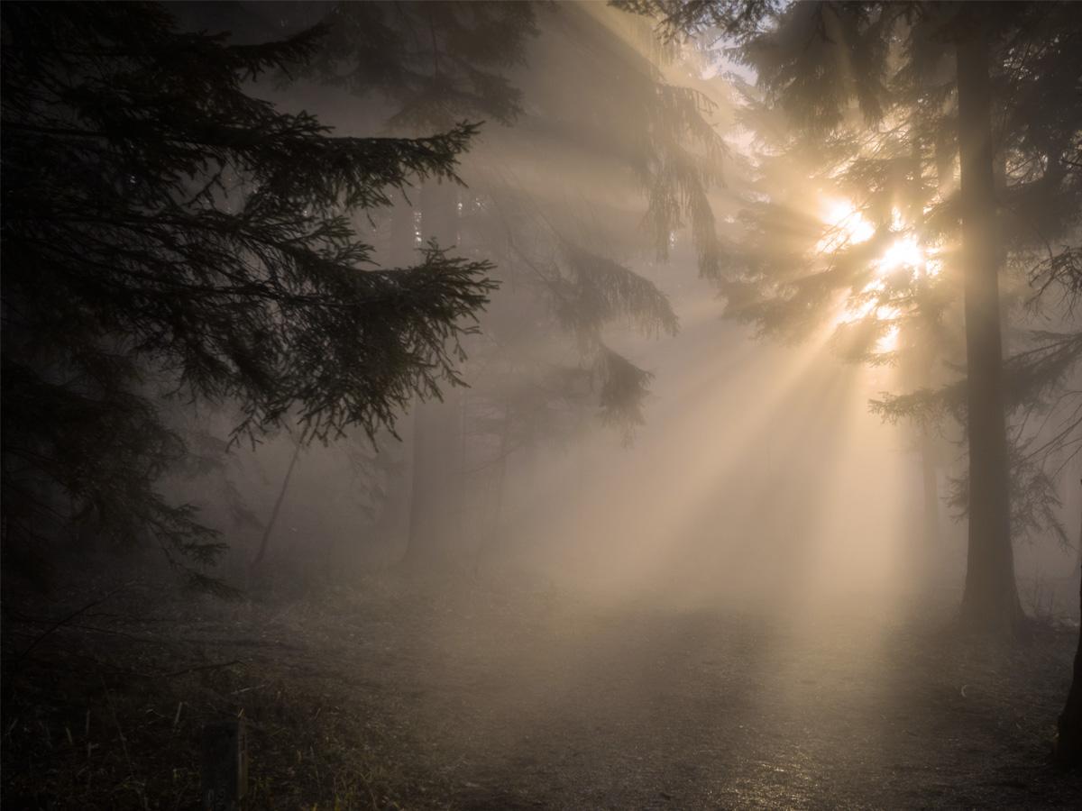 深森の夜明け
